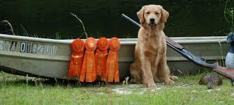 belgian sheepdog breeders in texas mini american australian shepherd breeders in the united states