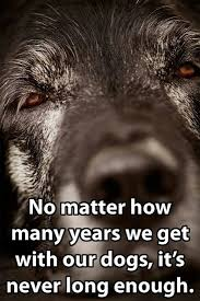 best 20 dog loss quotes ideas on pinterest dog loss pet loss