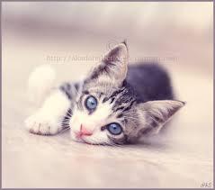صور قطط تدحك,صور قطط,صور قطط جميلة,صور قطط حلوه Images?q=tbn:ANd9GcSpII7uQMWRwK2bNZ0hf-7AUoiL4M2D5fyJNx2Y8Oty8XeMqmhr