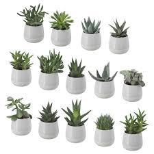 Succulents Pots For Sale by Succulent Plant With Pot Ikea