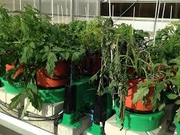 study abiotic stress response plant ditech
