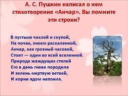 Какие средства выразительности в стихотворении «Анчар» Пушкина?