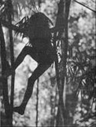 La historia del niño Gacela Images?q=tbn:ANd9GcSpviS5CKDxdgs9WLGGlwUazGOPeXlZ4IRdXQAHSLJMEfZObjJNLA