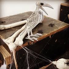 Halloween Skeleton Props by Crazy Bone Skeleton Raven 100 Plastic Animal Skeleton Bones