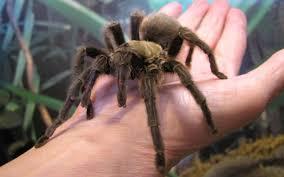 Ok, cure me please: SPIDERS! Images?q=tbn:ANd9GcSqxr22RokiqC23PoMPW_14DA12wHPezGQpQwcQ9ddrajjo_TiSwQ