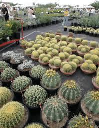 Desert Botanical Garden Plant Sale