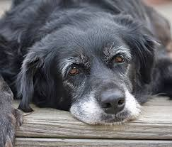 Older Dog Care - Tips for Senior Dog Health