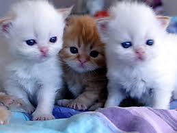 لمحبى القطط اجمل مجموعة لافضل