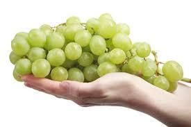 Ekološki uzgoj vinove loze Images?q=tbn:ANd9GcSsz1Gxc0HX4FQ26BXP74SrovavKIUc_wPJgYAJrAzQY8Sx4Vav8Q