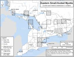 Hamilton Canada Map Eastern Small Footed Myotis Recovery Strategy Ontario Ca