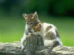 صور قطط تدحك,صور قطط,صور قطط جميلة,صور قطط حلوه Images?q=tbn:ANd9GcStwPmAb1Ow23Tm3BhO8Dtk-FS4O5HML1y-m0Eml70RHUp4pTG8