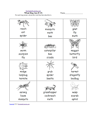 insects at enchantedlearning com