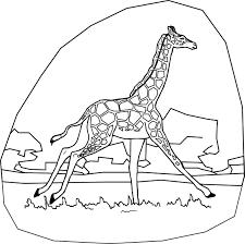 coloring page giraffe gianfreda net
