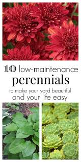 best 25 low maintenance shrubs ideas on pinterest low