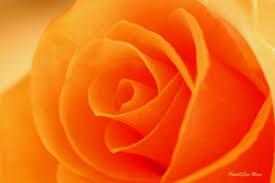 Orange Day - Page 2 Images?q=tbn:ANd9GcSuzmrmiLqBTlf_O-gLky3L2yoxoa-rWIXtkBxjp6_Q5NlTKTAb