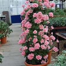 4567 best bloemen en planten images on pinterest plants flowers