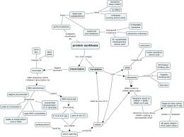 Concept Maps Protein Synthesis Concept Map Protein Synthesis