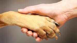 Projeto de proteção animal busca por parceiros na região de ...