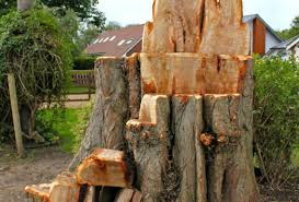bench things to do with my tree stump stunning tree stump bench