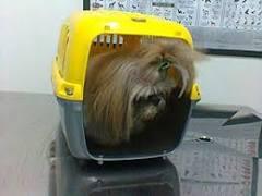 Câmara aprova PL que permite animais em ônibus de Florianópolis ...