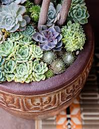 Succulents Pots For Sale by Container Designs With Succulent Plants Sunset
