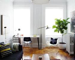 decorate your house with tall house plants wearefound home design