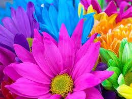 دراسة سيكولوجية الألوان images?q=tbn:ANd9GcSyMvqq6Wi_F8OnMaOZUSt8xOL90s0TldNig3_-zmzegFts7ik&t=1&usg=__rPznTU-HgEnNsnZikxM-GI2osHA=