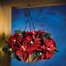 image of a poinsettia plant hanging from a window