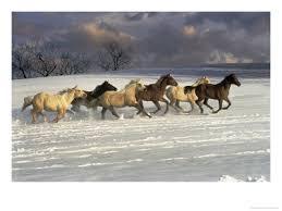 Колко са конете? - Page 2 Images?q=tbn:ANd9GcT-HabQpG3Grnnx9wDM_GObuXPZIvOujzamwUmK-bYan4uarwc&t=1&usg=__remAJ38B1CZELtBInozf8McoqMA=