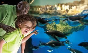seaworld black friday deals seaworld san antonio seaworld san antonio groupon