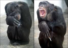 القرود انواعها  ونبذه عنها والصور Images?q=tbn:ANd9GcT06K2LeEwyZ03uPUztfeqcUELVX2qBKQctxh0SoL23-H4-7jT1nA