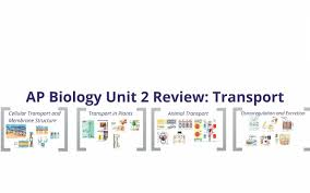ap bio unit two review youtube