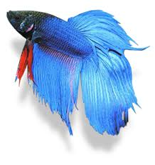 I de pescado   Images?q=tbn:ANd9GcT1739n_MBJHvePKgXtsYVp5fXaX_QZuLAtNbH0PQ8yS-6E2Xqu
