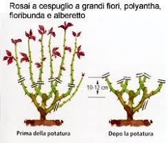 potare i rosai