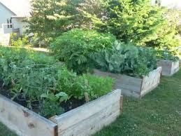 Planning A Raised Bed Vegetable Garden by Raised Bed Vegetable Gardening Learn The Advantages Of Growing