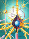 energía / <b>Neurofibrillas</b>