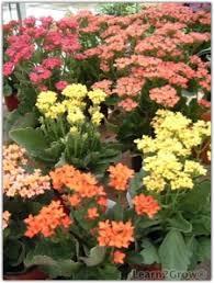 winter blooming houseplants indoor blooming plants gardening