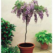 Design My Backyard Online Free by Garden Design Garden Design With Wisteria Flowers Trees Uamp