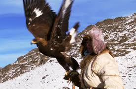 hunting golden eagle vs fox human planet bbc youtube