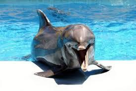 Дельфины могут помнить голоса друзей более 20 лет
