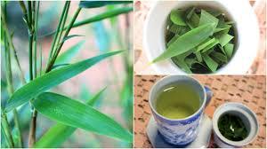 Benefícios do chá de folhas de bambu - Lar Natural