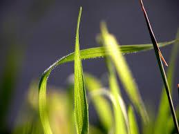 un filo di erba