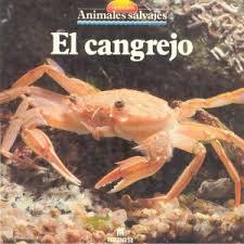 Animales: El cangrejo Images?q=tbn:ANd9GcT7SH5c9Ja--eaTHh6HI13Ra0AjS_9HWq7Ce7Qj0hqv1i4FdMXz&t=1
