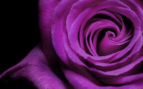 வால்பேப்பர்கள் ( flowers wallpapers ) - Page 5 Images?q=tbn:ANd9GcT7iHpNhb8Rh9Ei_uzwLVqKQ4Ef_yKA6_ChkBo76VFGQPn0ukKgng