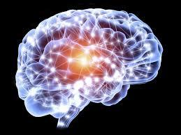 Adult Neurogenesis  Can We Grow New Brain Cells  Verywell