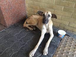 Cachorro em sofrimento extremo precisa de ajuda em Madureira, no ...