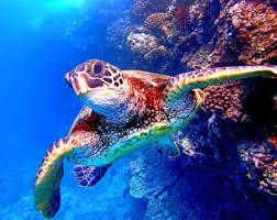 Sea Turtle Home Decor Swimming Turtle Art Etsy