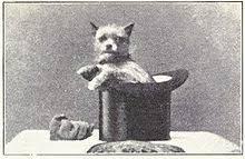 oldest affenpinscher affenpinscher wikipedia
