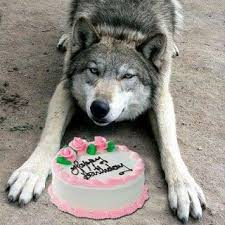 wolf happy birthday