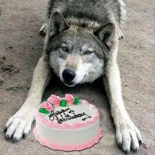 wolf happy birthday